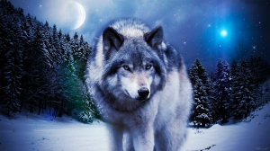 wolf_in_the_winter_by_sky_x_wolf-d6wycmj
